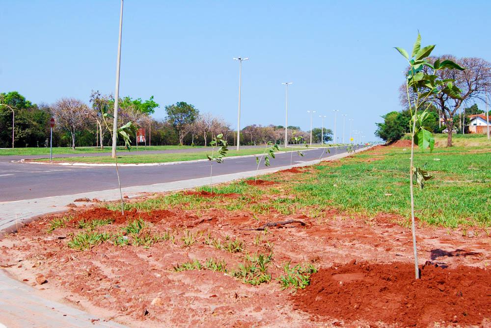 """Prefeitura Municipal realizou o plantio de árvores na Rodovia """"Padre Valentim Felipe Stefanoni"""""""